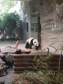 Servus Panda